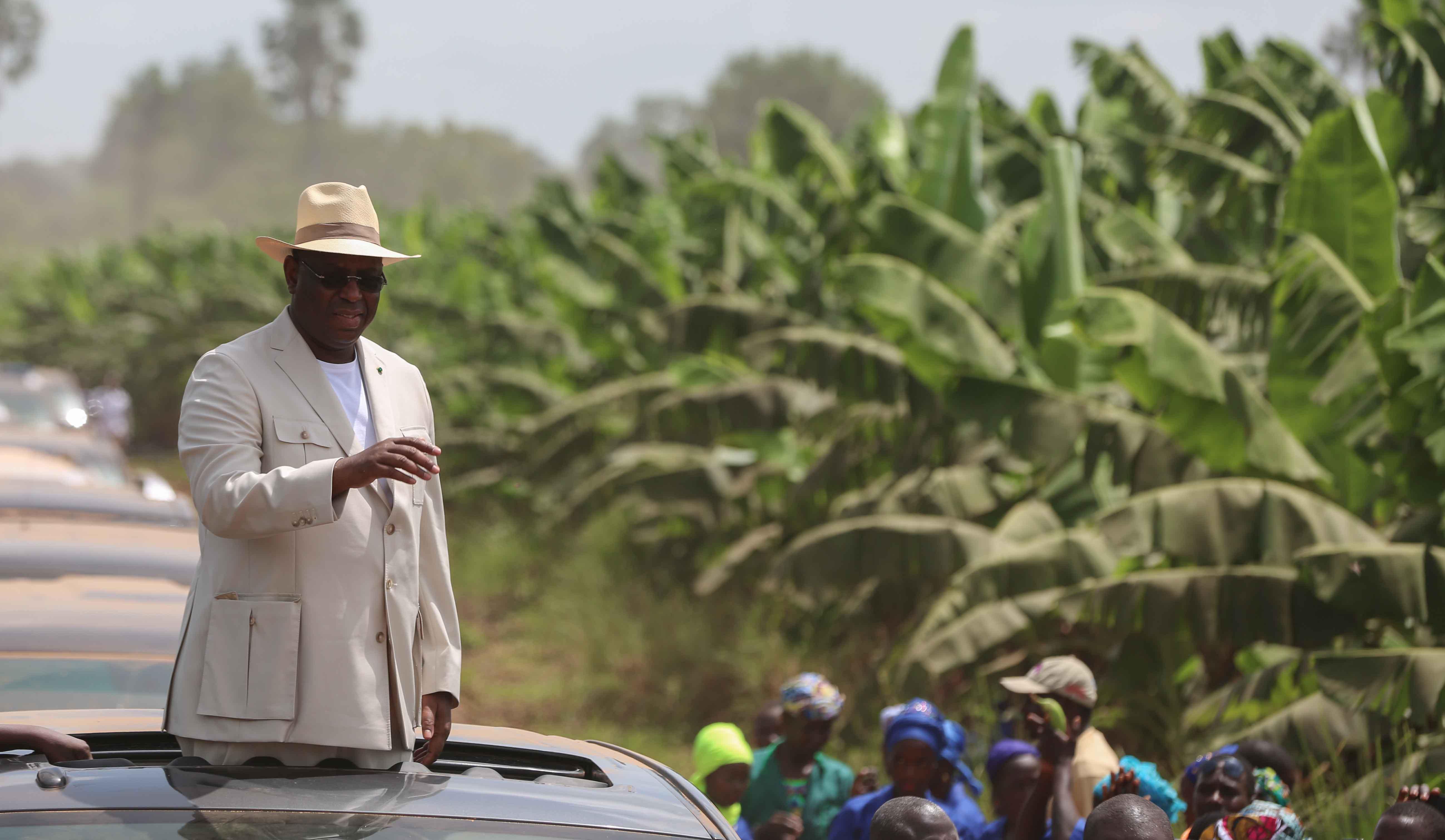 Photos : Visite du Président Macky Sall dans les plantations de banane (200 ha) de Mamadou Sall et de CORPROBAT á Laboya (Tambacounda)