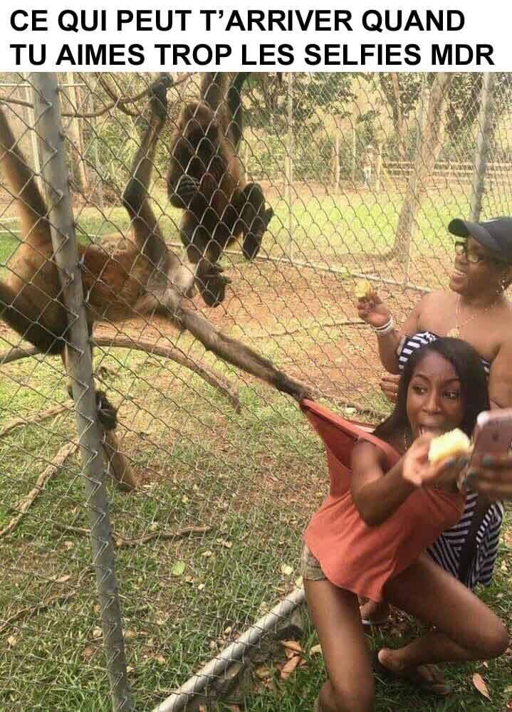Quand vous faites selfie dans un zoo évitez la jalousie des...