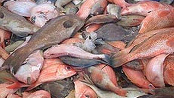 Kolda: 50 kg de poissons impropres à la consommation saisis