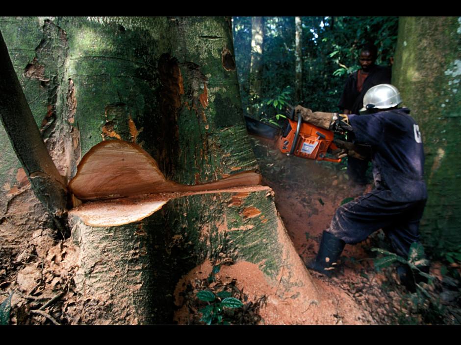 Déforestation en Casamance L'Etat annule tous les permis de coupe
