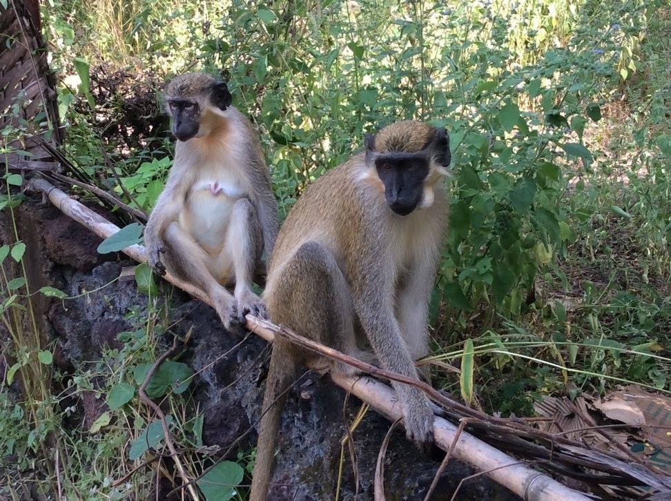 Le Parc National de Niokolo Koba