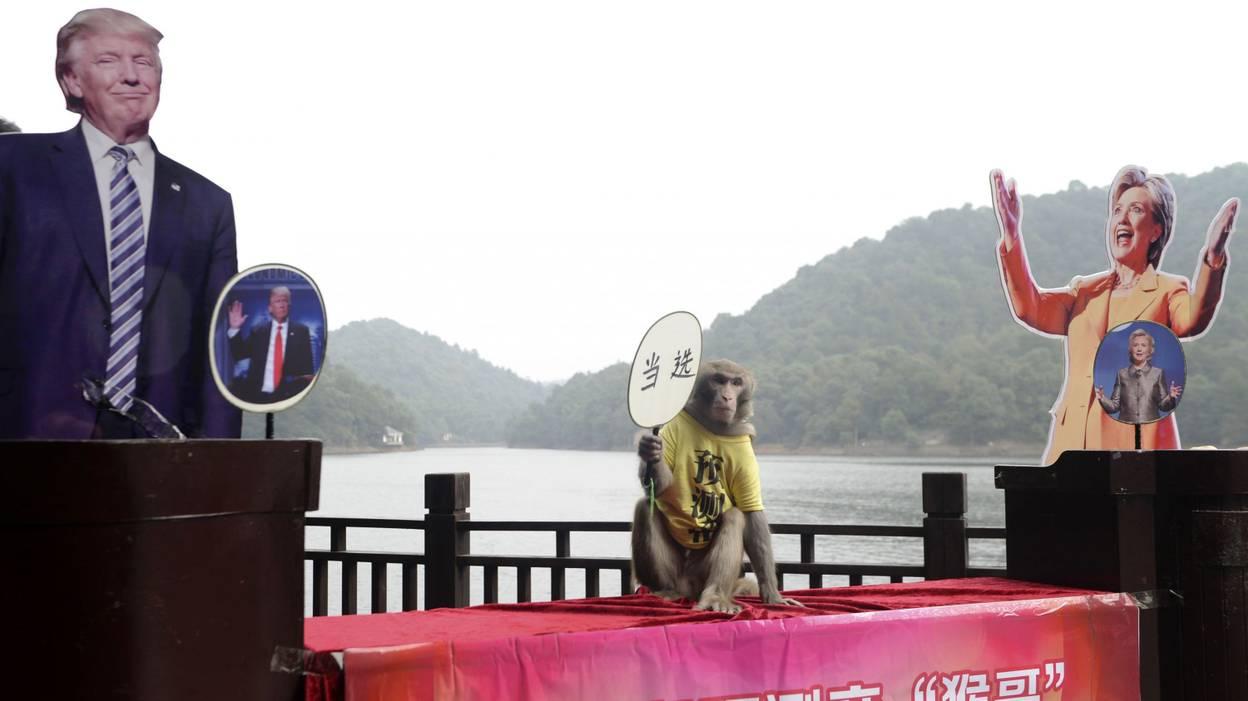 Gueda, le singe devin chinois qui prédit la victoire de Trump