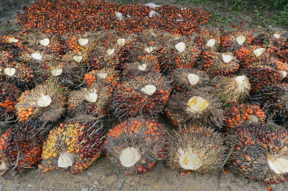 Près de la moitié de l'huile de palme consommée en Europe se trouve... dans le diesel