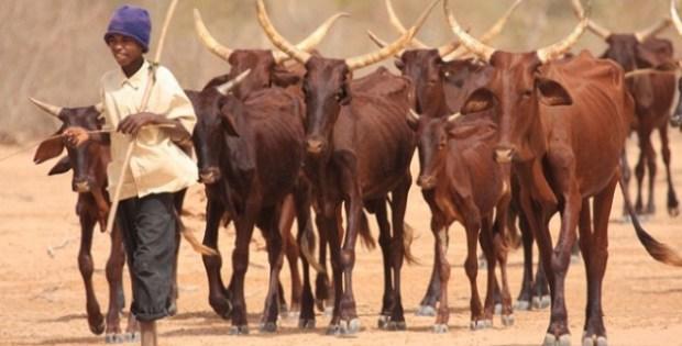 Dahra Djolof : Bientôt un siège pour la mutuelle des éleveurs du Sénégal