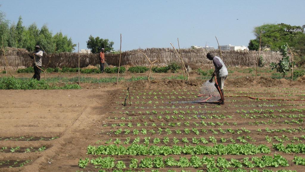 Farick : L'Onas réfléchit à la réutilisation des eaux usées dans le maraîchage
