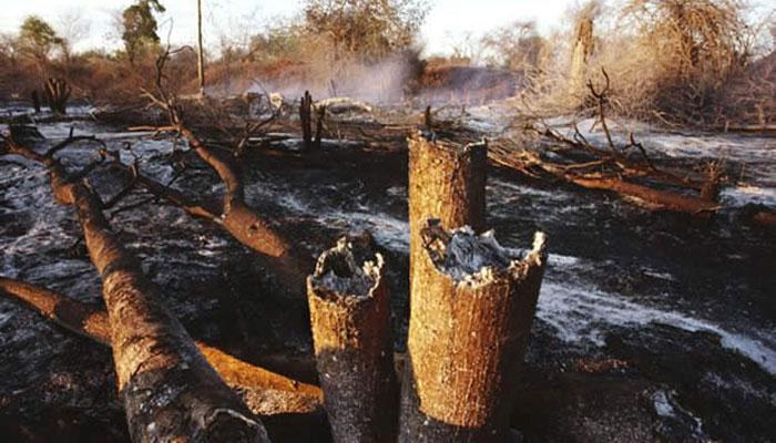Ranch de Dolly, près de 14 mille ha détruits par les flammes