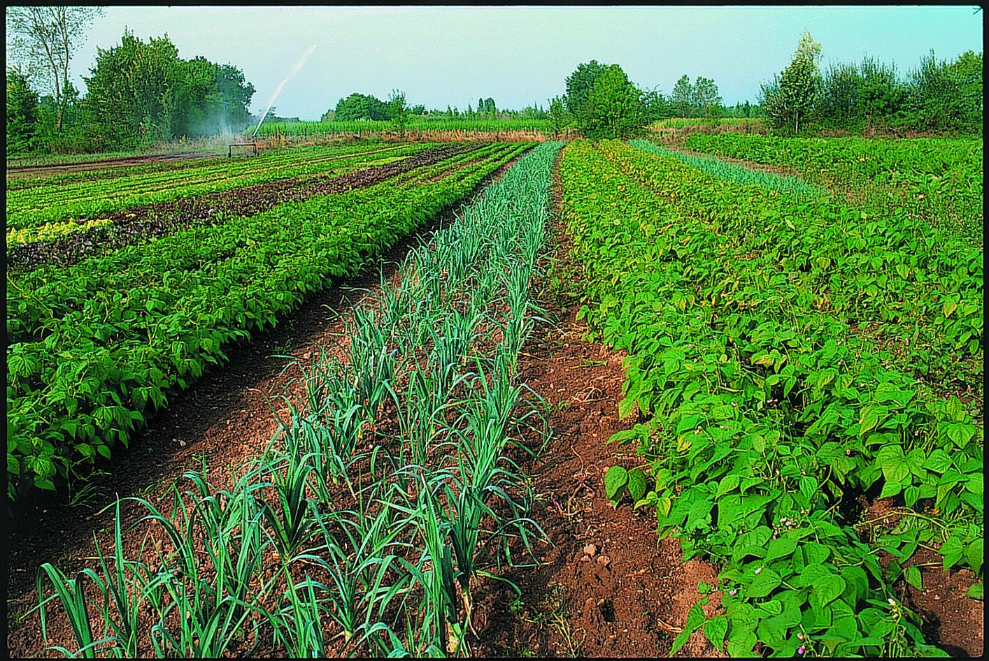 Au Sénégal, la croissance est dans les champs