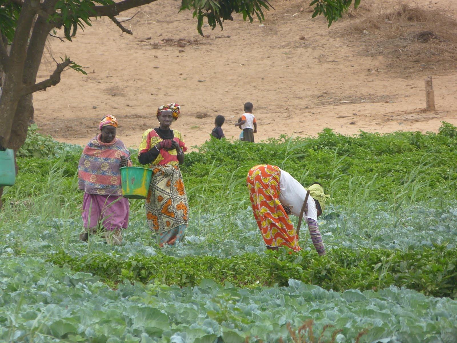Adjia Ndiouck Lindor Mbaye, présidente des femmes rurales: « Les femmes rurales approuvent la qualité des semences »