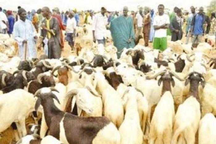 Kahone : Un camion fou tue un éleveur et ses moutons
