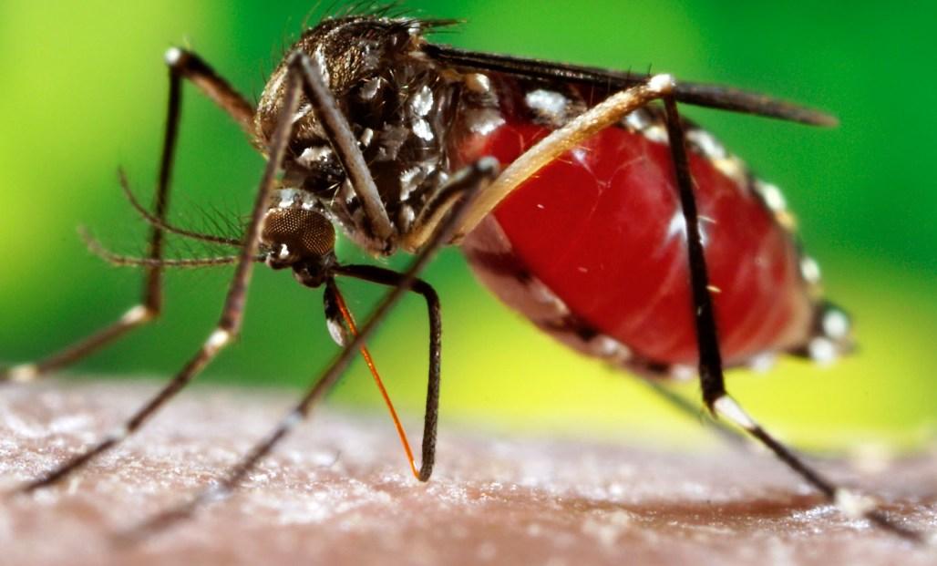 Santé : Déjà 79 cas de dengue confirmés à Louga