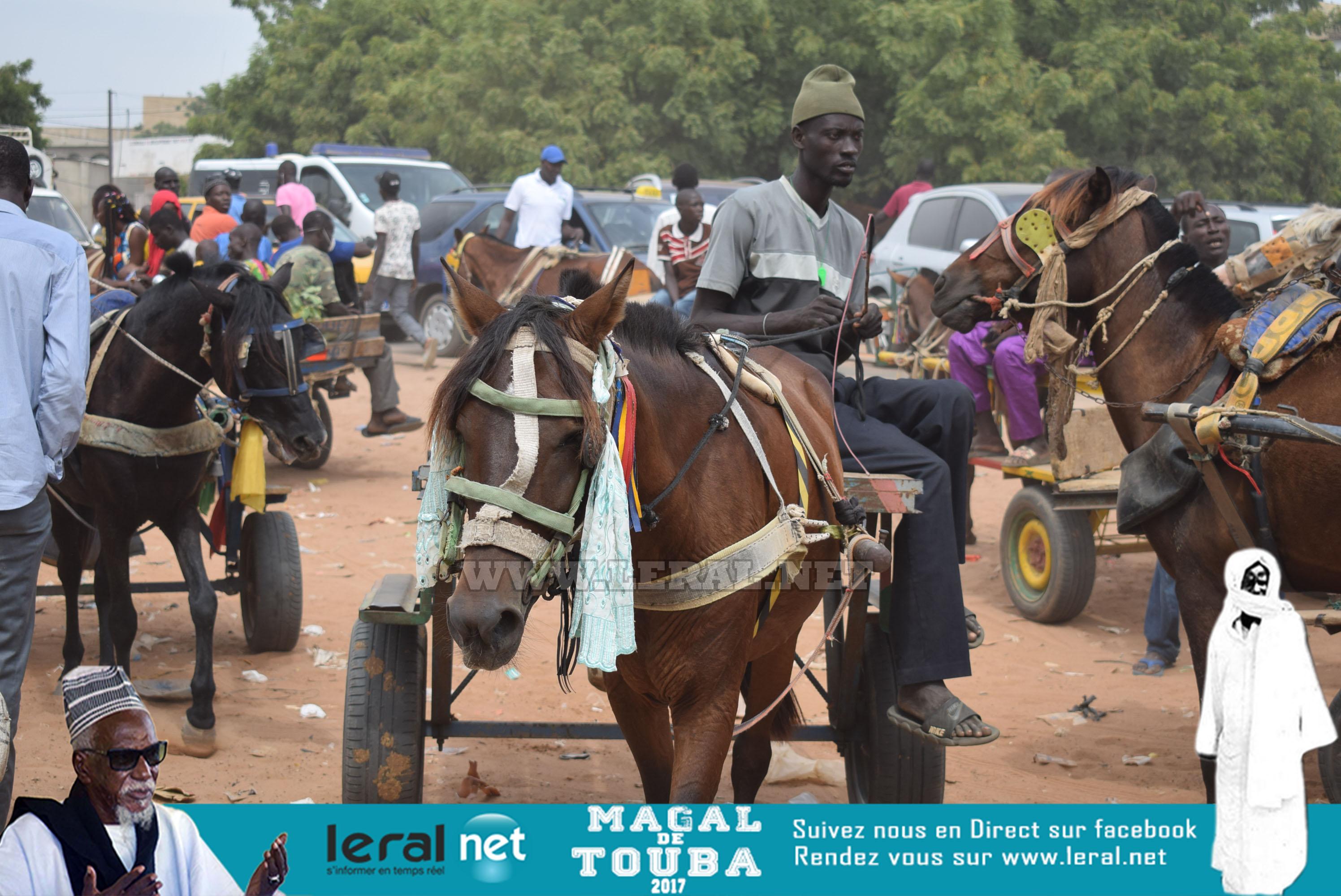Images temps fort du Magal 2017