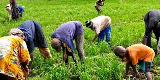 Alerte : les riziculteurs de Matam pleurent la baisse du niveau d'eau du fleuve