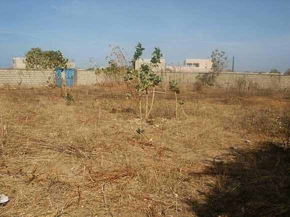 Thiès-Spoliation foncière: L'ex-Directeur régional des Hlm en garde-à-vue