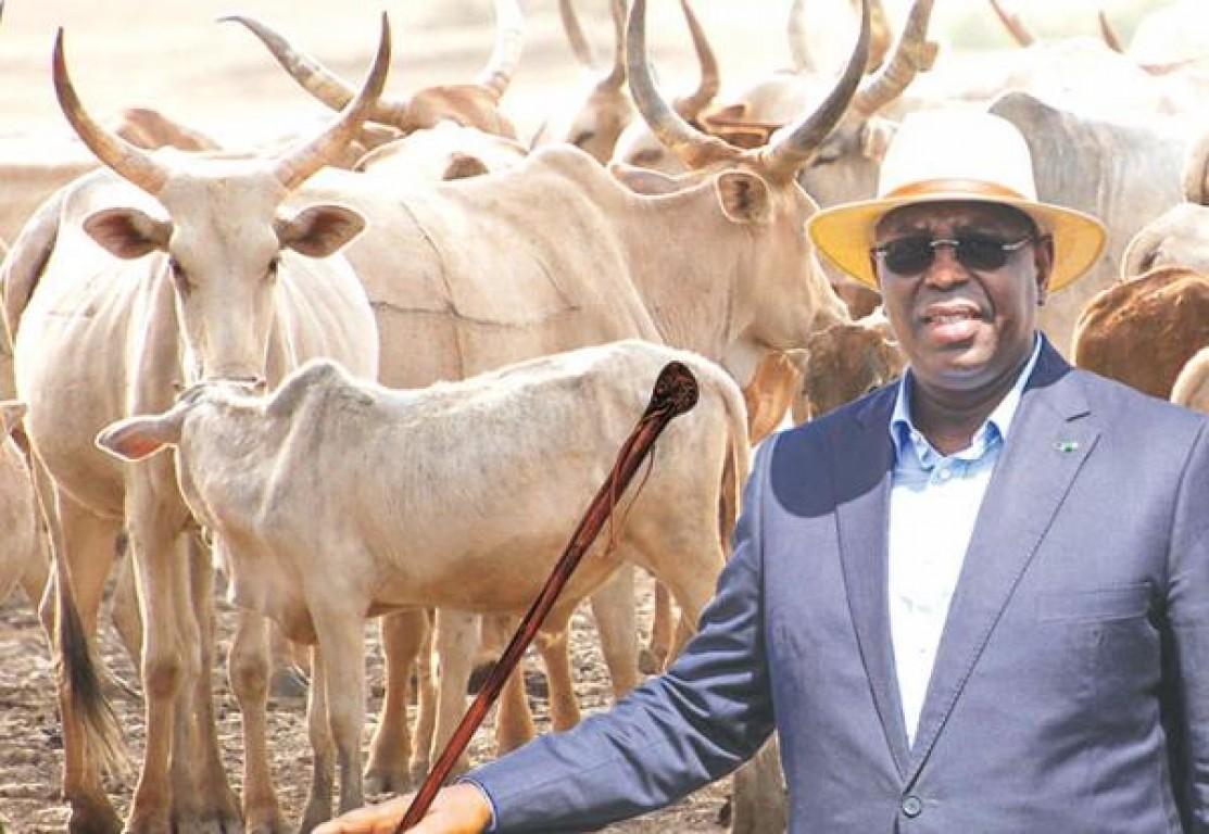 """Kolda: Macky Sall réaffirme sa volonté d'éradiquer """"au plus vite"""" le vol de bétail"""