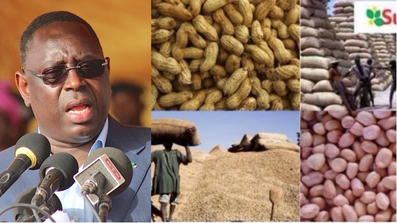 Le Président Macky Sall aux paysans du Saloum : «Ne bradez pas vos arachides »