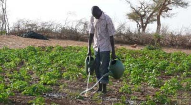 Mutualisation des politiques de recherche : Un viatique du développement agricole