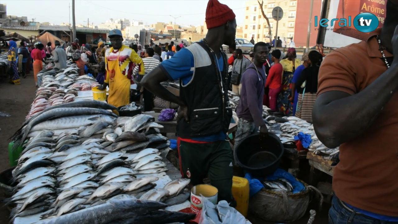 Au coeur du marché aux poissons (Parcelles Assainies)