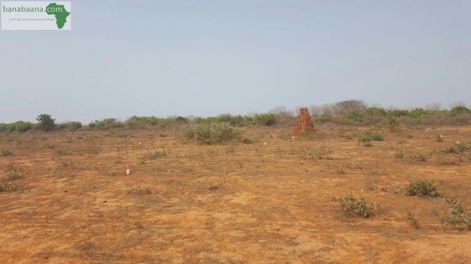 Urgent-Sébikotane: Échauffourées entre les jeunes de l'ASC Darou Salam et l'usine SENAC