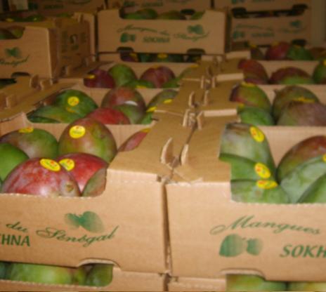 Supposée interdiction de la mangue sénégalaise dans l'UE : Dr Malick Diop dément et précise