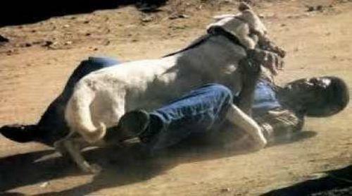 Espagne : Un Sénégalais se fait mordre le sexe par un chien