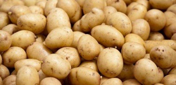 """Pomme de terre: Des explications sur la """"mauvaise"""" qualité du produit"""