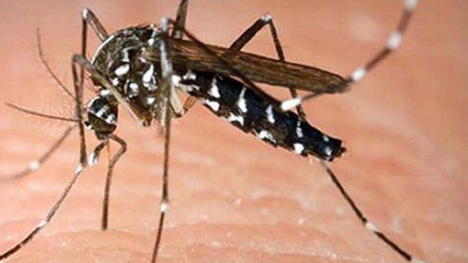 Dengue: le bilan passe de 9 à 12 cas