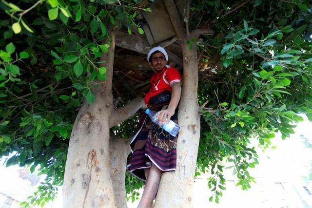 Ahmed Houbeichi dans la cabane qu'il s'est construite dans un arbre en plein Sanaa, capitale du Yémen. Photo prise le 4 octobre 2018