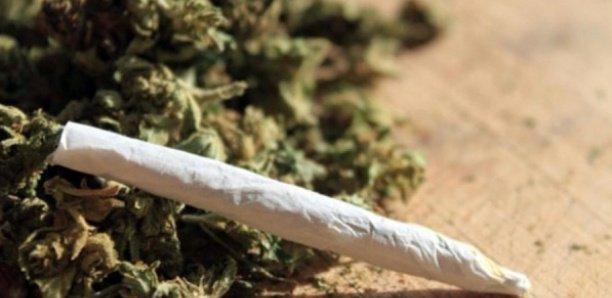 """""""Il y a des députés fumeurs de chanvre indien"""""""
