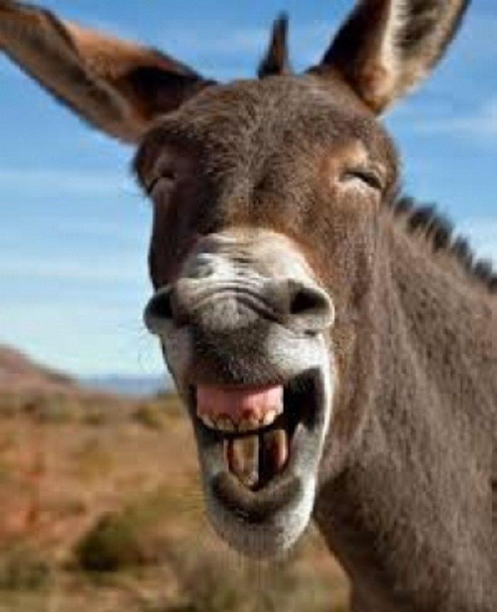 Louga: un âne mord mortellement un enfant de 9 ans