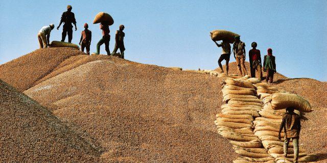 Filière arachidière : les opérateurs stockeurs réclament 6 milliards à la Sonacos