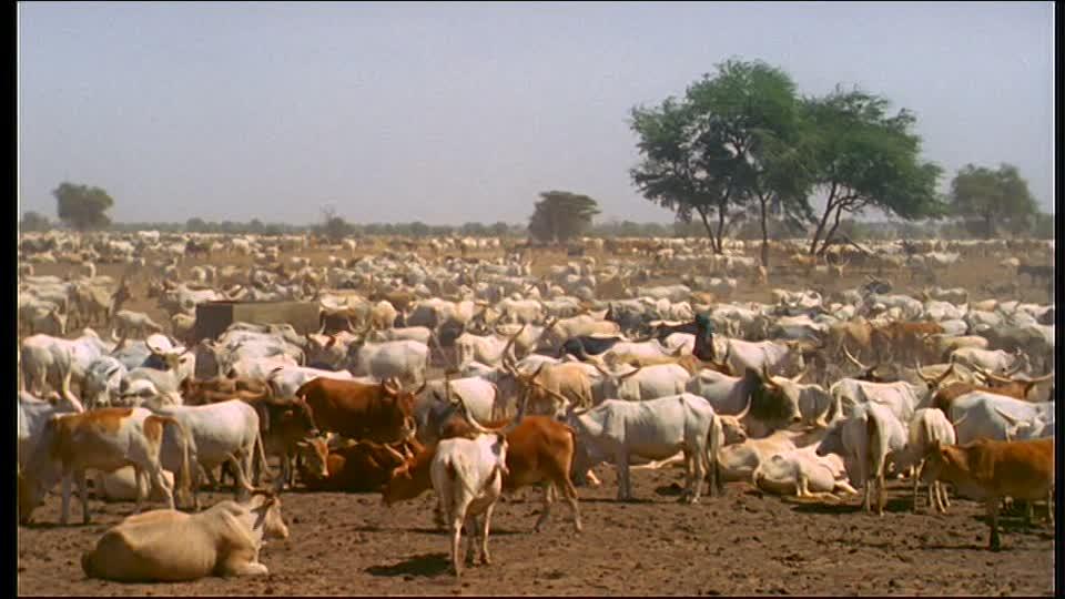 Plus de 500 bêtes volées depuis Janvier : Kaffrine crie sa détresse