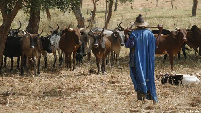 Hivernage tardif et situation difficile pour le bétail: les éleveurs appellent l'Etat à l'aide