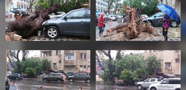 (Photos): Devant Sorano, un arbre déraciné par le vent, fait des dégâts