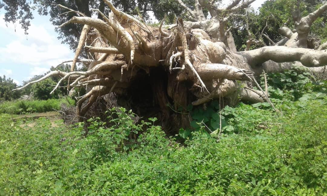 (PHOTOS)- Taïba Keur Set Goumbo: Un village sénégalais presque rayé de la carte par une grosse tornade