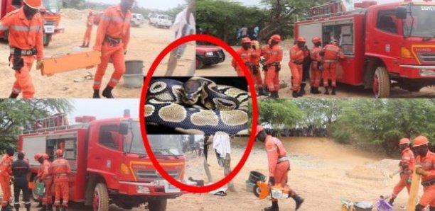 Panique à Guédiawaye: Le serpent de la terreur n'est pas encore capturé