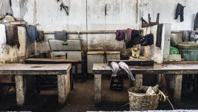 Gambie: les usines de transformation de poissons ciblées par Greenpeace