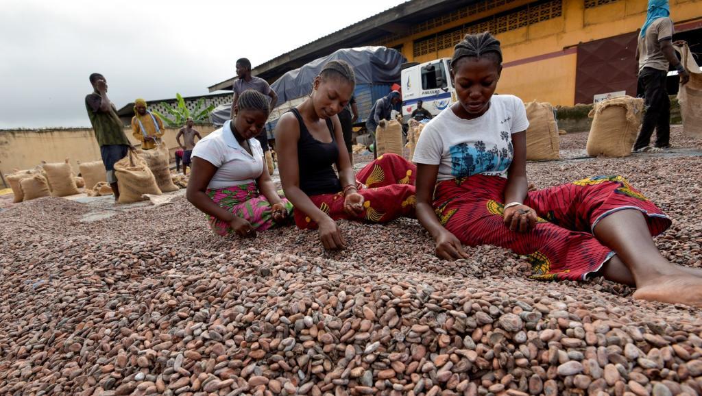 Cacao ivoirien: La menace d'un embargo américain