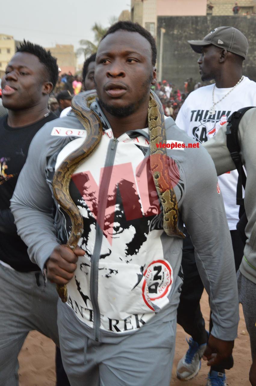 Lutte - Invaincu depuis 2012: Qui va arrêter Ama Baldé ?