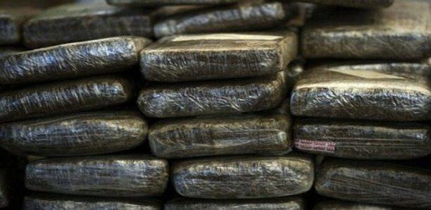 Drogue: La police saisit 41 kilos de chanvre indien de type «Brown»