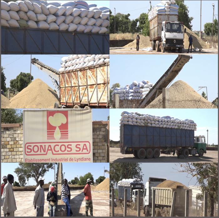 Transformation de l'arachide: «Sonacos n'a plus de stock d'huile invendu»