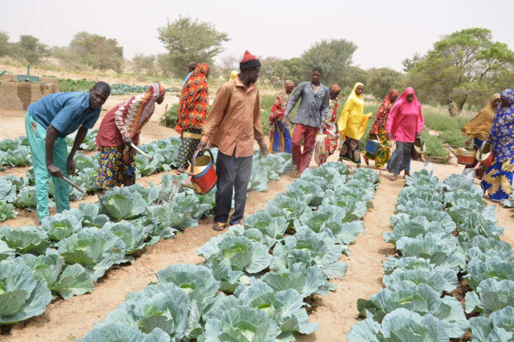 Louga/Front Social: Les agents de l'État du secteur agricole et militants du SYNTAS, crient leur ras-le-bol