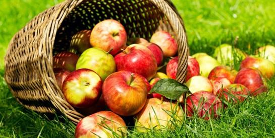 Trop de cholestérol ? Passez à deux pommes par jour