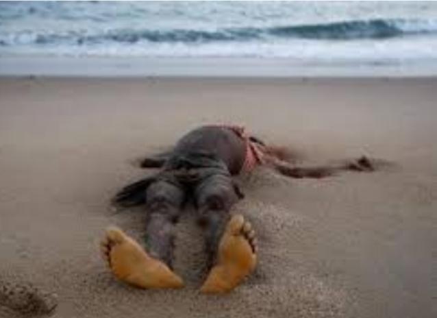 Hamo 4: un corps en état de décomposition découvert sur la plage