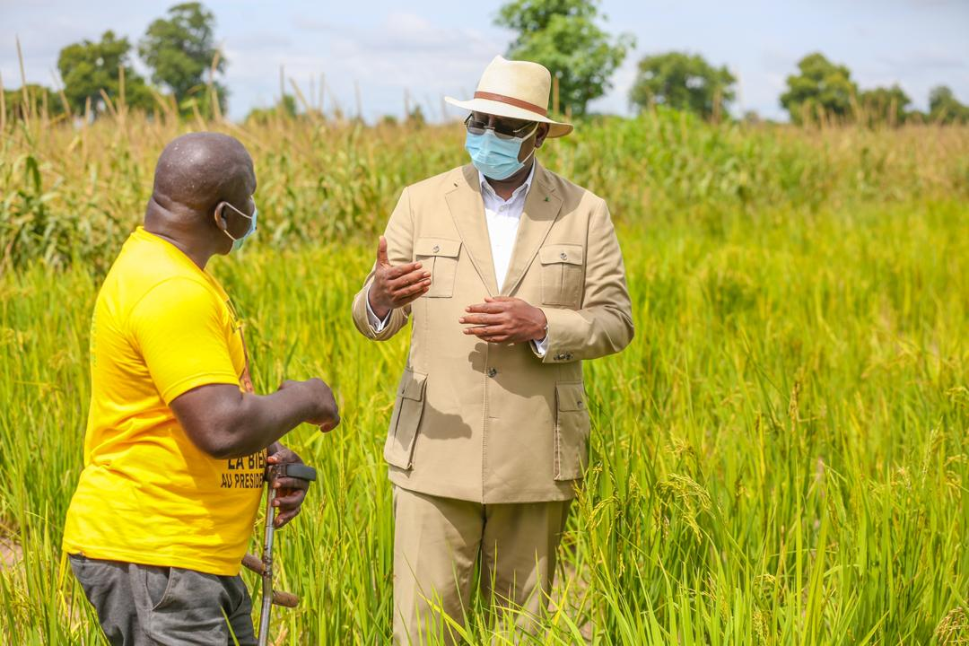 Macky Sall à Keur Socé: Visite des champs de la COPAR de 8 500 ha (Photos)