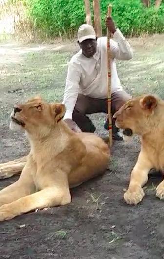 Macky Sall relance le tourisme local avec de vrais lions  ( Vidéo )