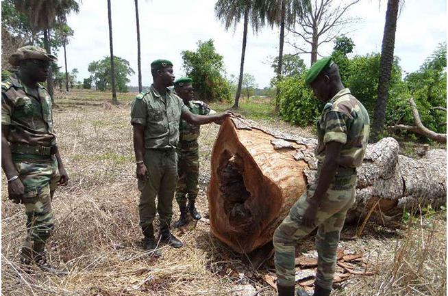 Trafic illicite de bois: L'Armée instruite à combattre cette pratique