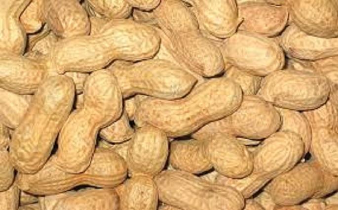 Hausse du prix du kilogramme d'arachide au producteur: A Diourbel, le montant jugé acceptable, mais…