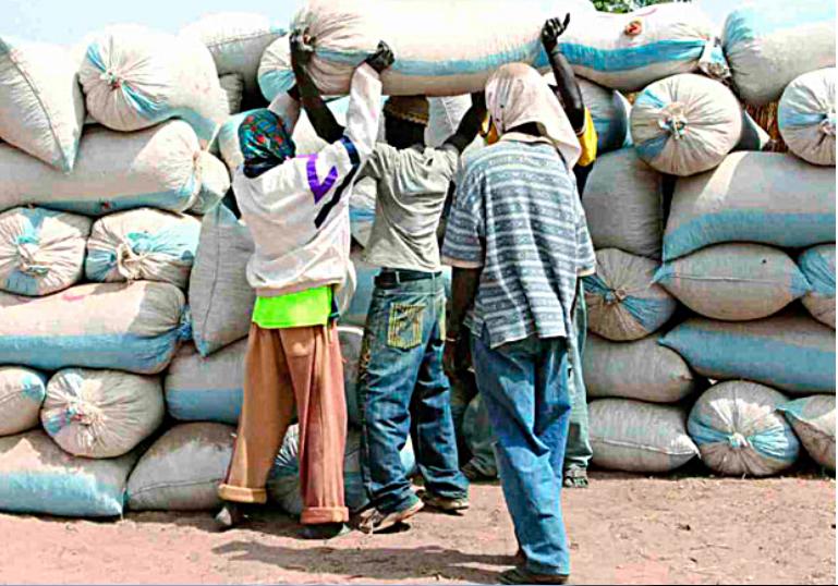 Campagne de commercialisation de l'arachide: Un démarrage timide noté