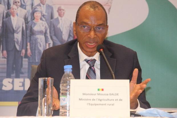 Ambition d'autosuffisance en riz ratée pour le Sénégal: Moussa Baldé, le ministre accuse les experts