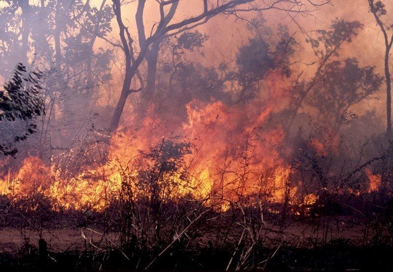 Ndiaw Bambali: un incendie réduit 60 tonnes de mil en cendres